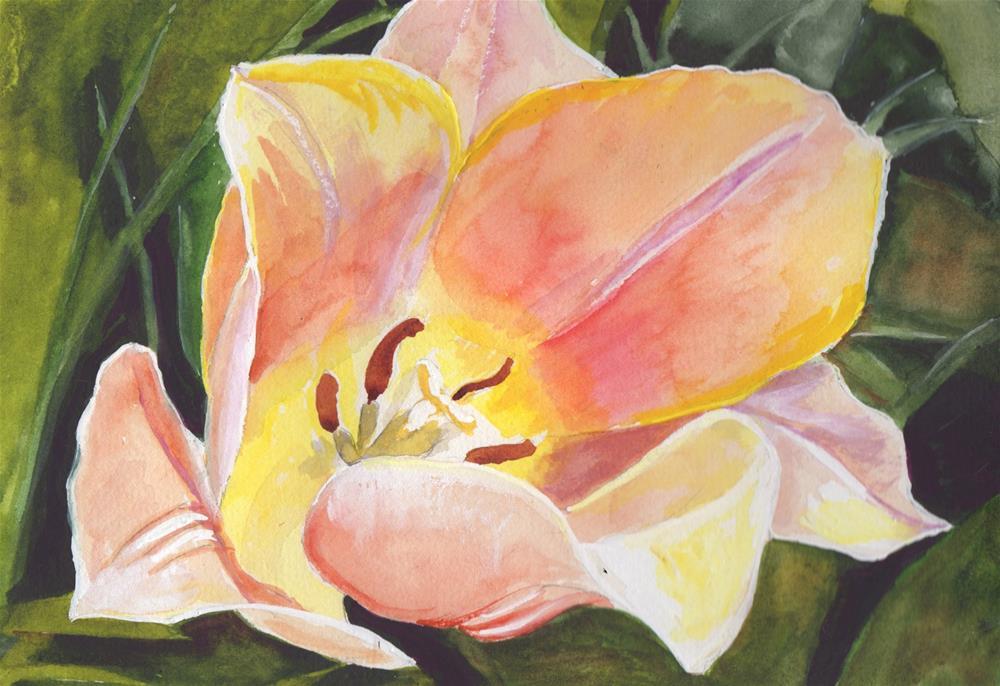 """""""Peach Tulip"""" original fine art by Bunny Griffeth"""