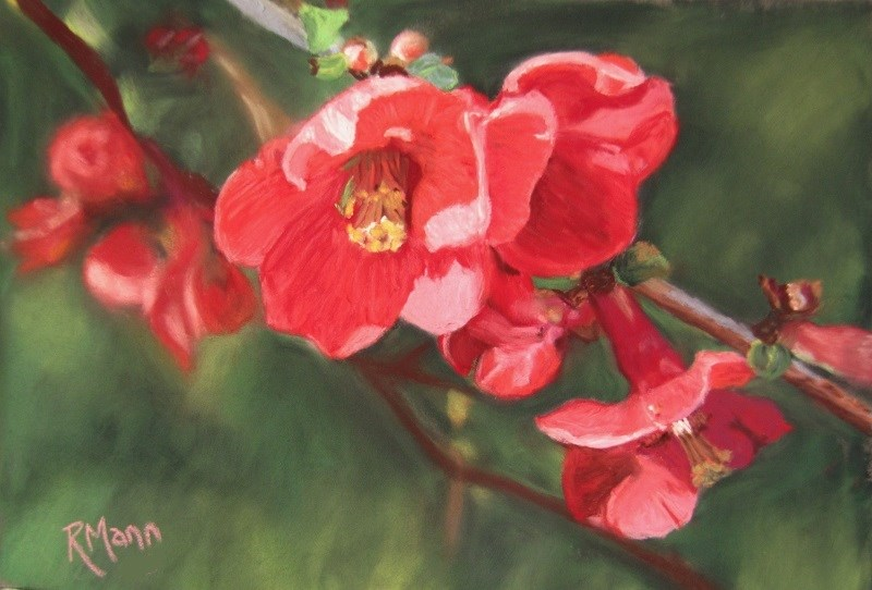 """Flowering Quince"" original fine art by Ruth Mann"