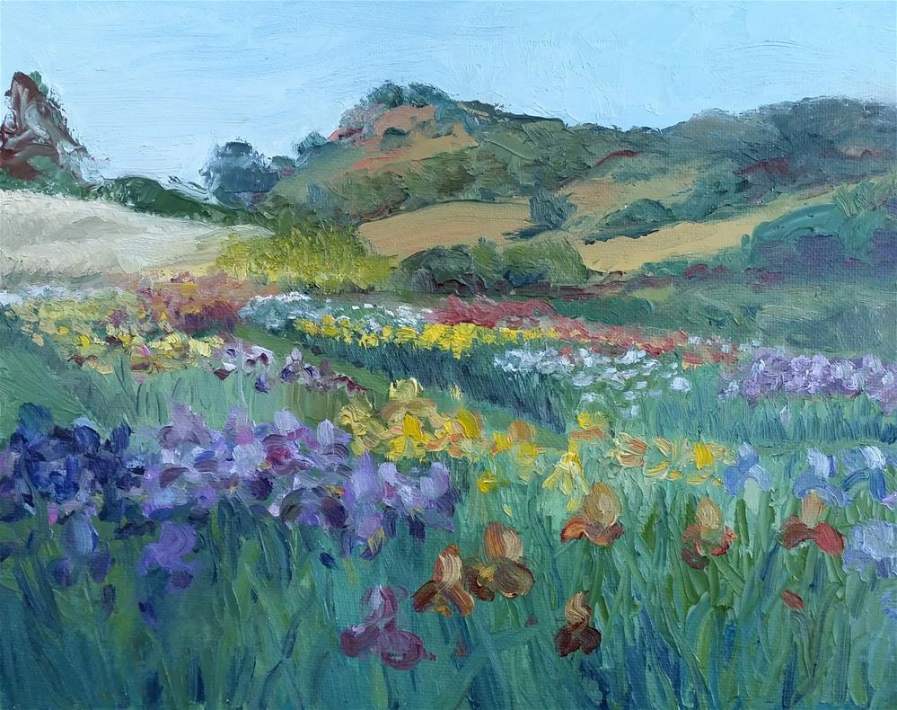 """Iris in Napa"" original fine art by Kim Homes"