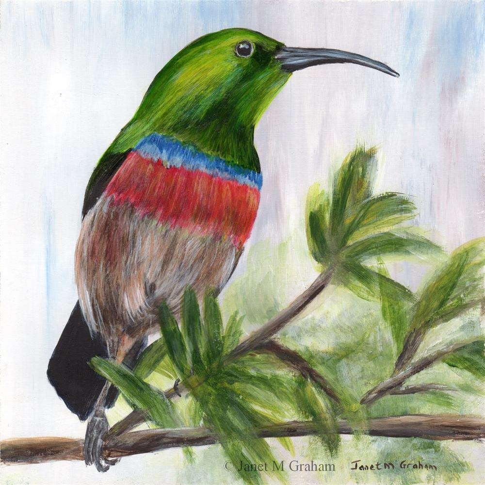 """Southern Double Collared Sunbird"" original fine art by Janet Graham"