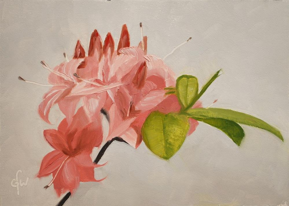 """Pink Azalea"" original fine art by Gary Westlake"