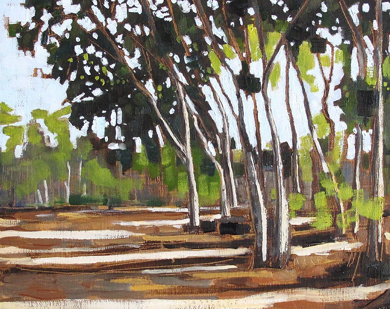 """Eucalyptus Trees in Balboa Park"" original fine art by Kevin Inman"