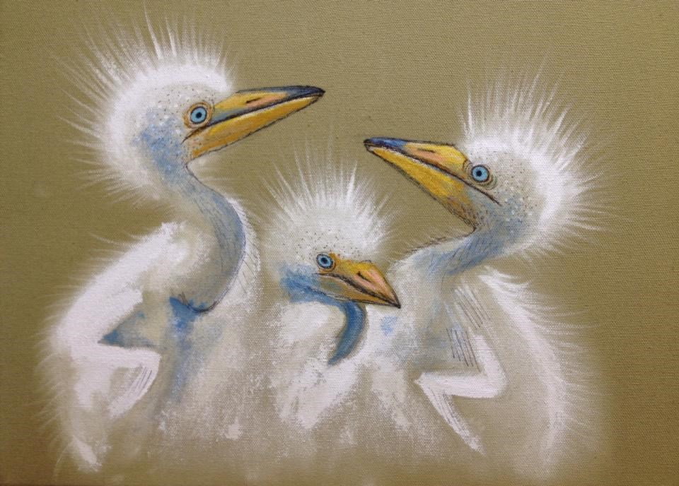 """Egret Babies"" original fine art by Ande Hall"
