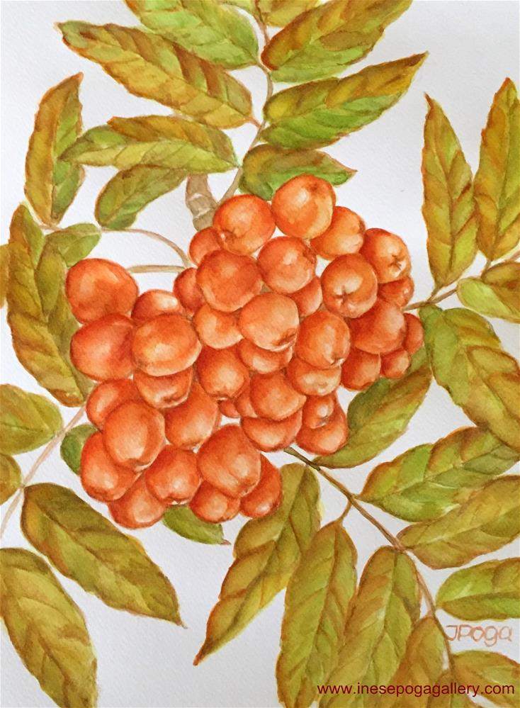 """Branch of fall, ash berries"" original fine art by Inese Poga"