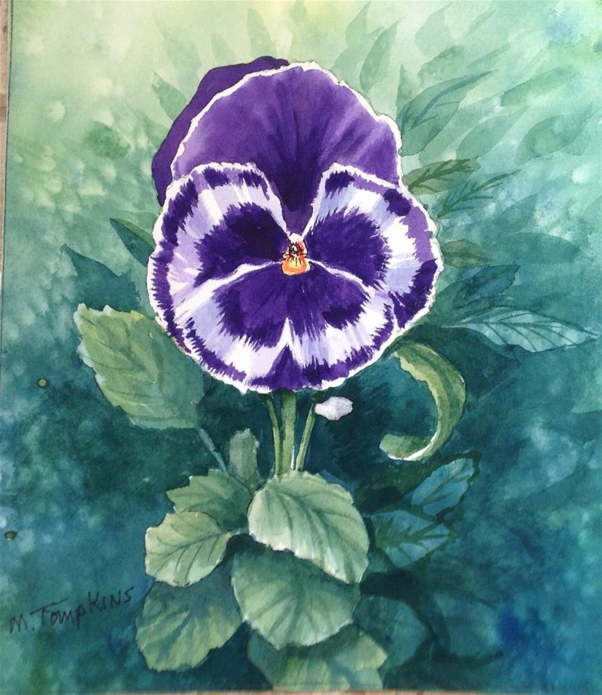 """""""Pansy Pansy"""" original fine art by Mark Tompkins"""