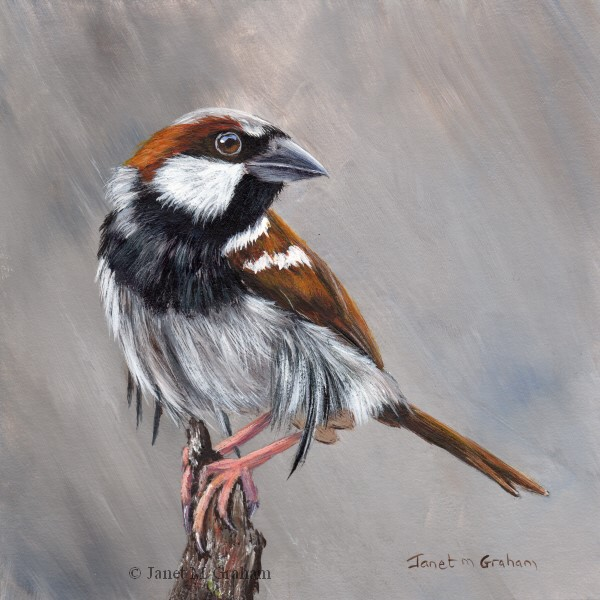 """Sparrow"" original fine art by Janet Graham"