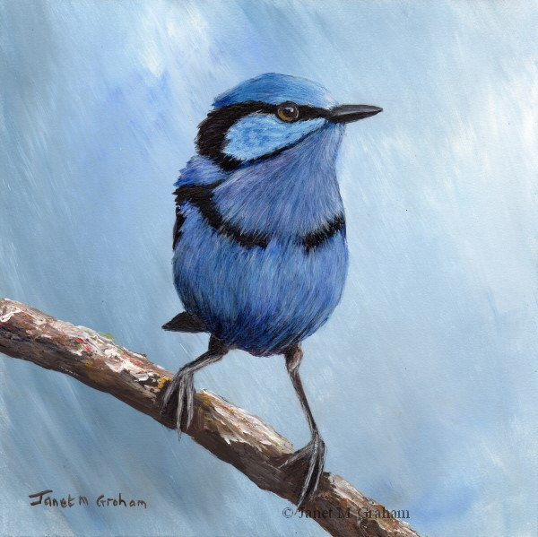 """""""Splendid Fairy Wren"""" original fine art by Janet Graham"""