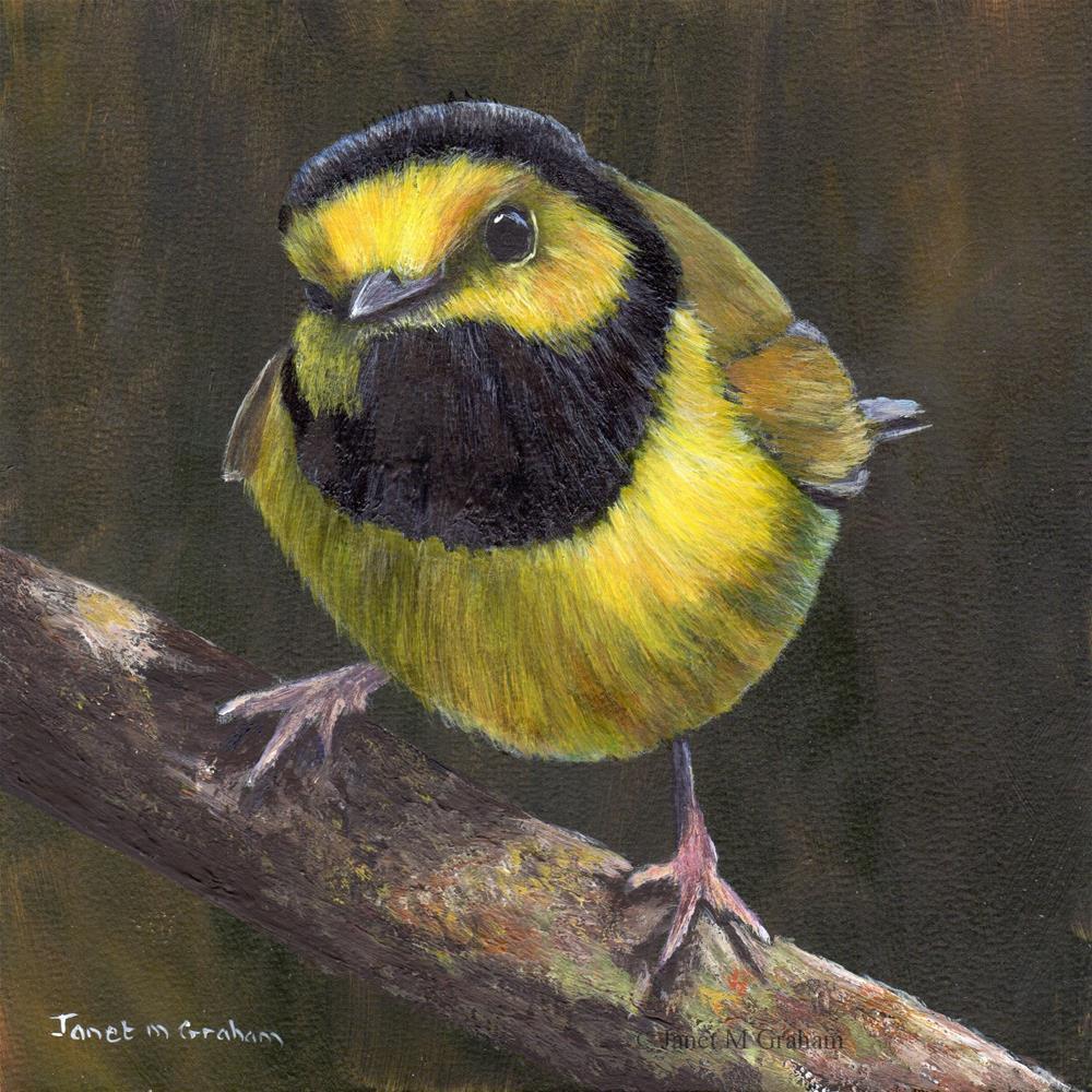 """""""Hooded Warbler"""" original fine art by Janet Graham"""