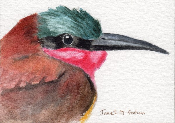 """Carmine Bee - Eater ACEO"" original fine art by Janet Graham"
