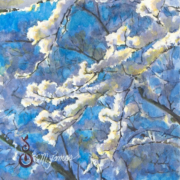 """""""Snowy Branches in the Sunlight #1"""" original fine art by Catherine M. James"""