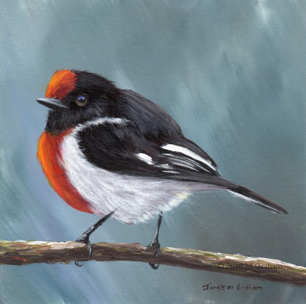 """Red Capped Robin No 5"" original fine art by Janet Graham"