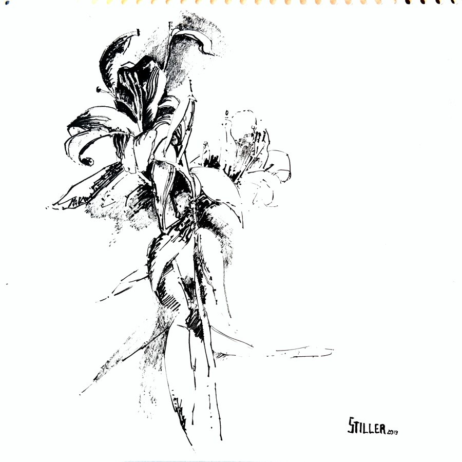"""2834 Lillies"" original fine art by Dietmar Stiller"
