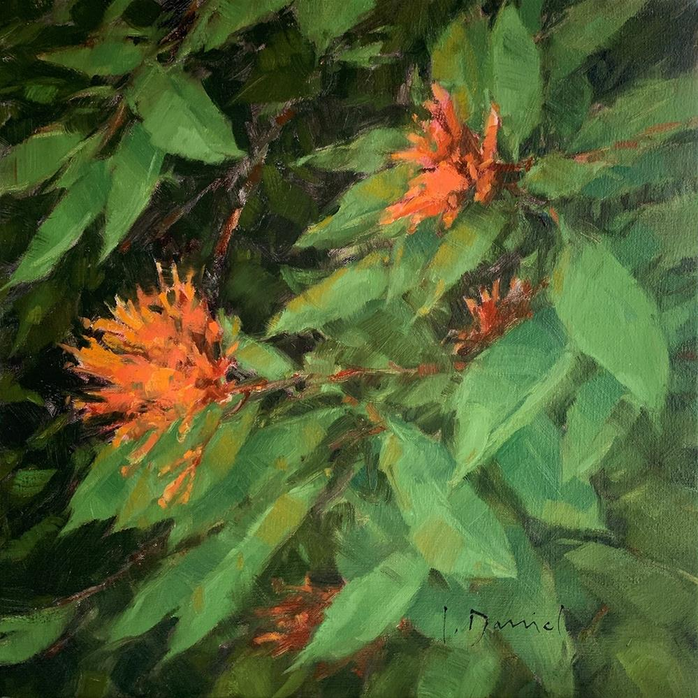 """Garden Fire - Final week of show!"" original fine art by Laurel Daniel"