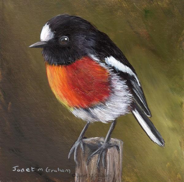 """Scarlet Robin No 10"" original fine art by Janet Graham"
