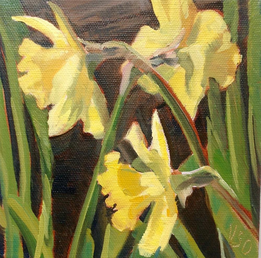 """Daffodil Chiaroscuro"" original fine art by Valerie Orlemann"