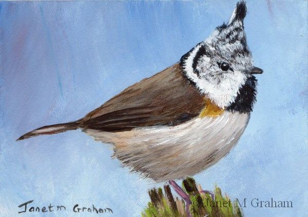 """""""Crested Tit ACEO"""" original fine art by Janet Graham"""