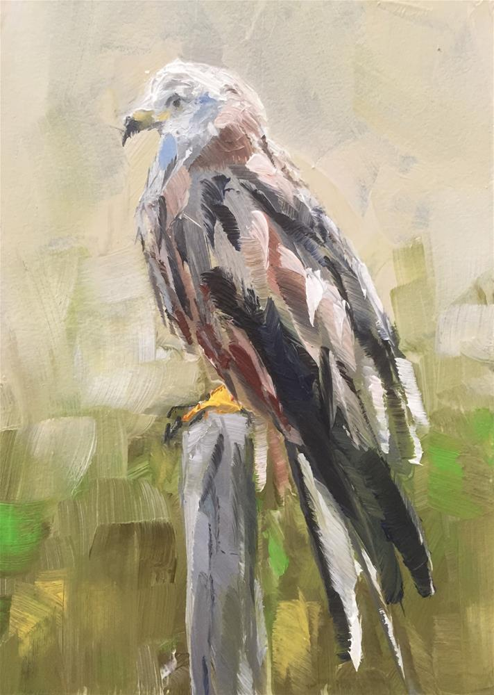 """Red Kite"" original fine art by Gary Bruton"