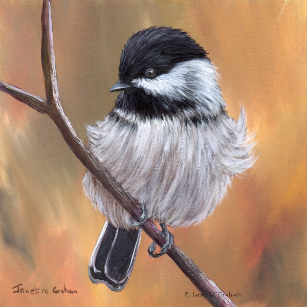 """Black Capped Chickadee No 8"" original fine art by Janet Graham"