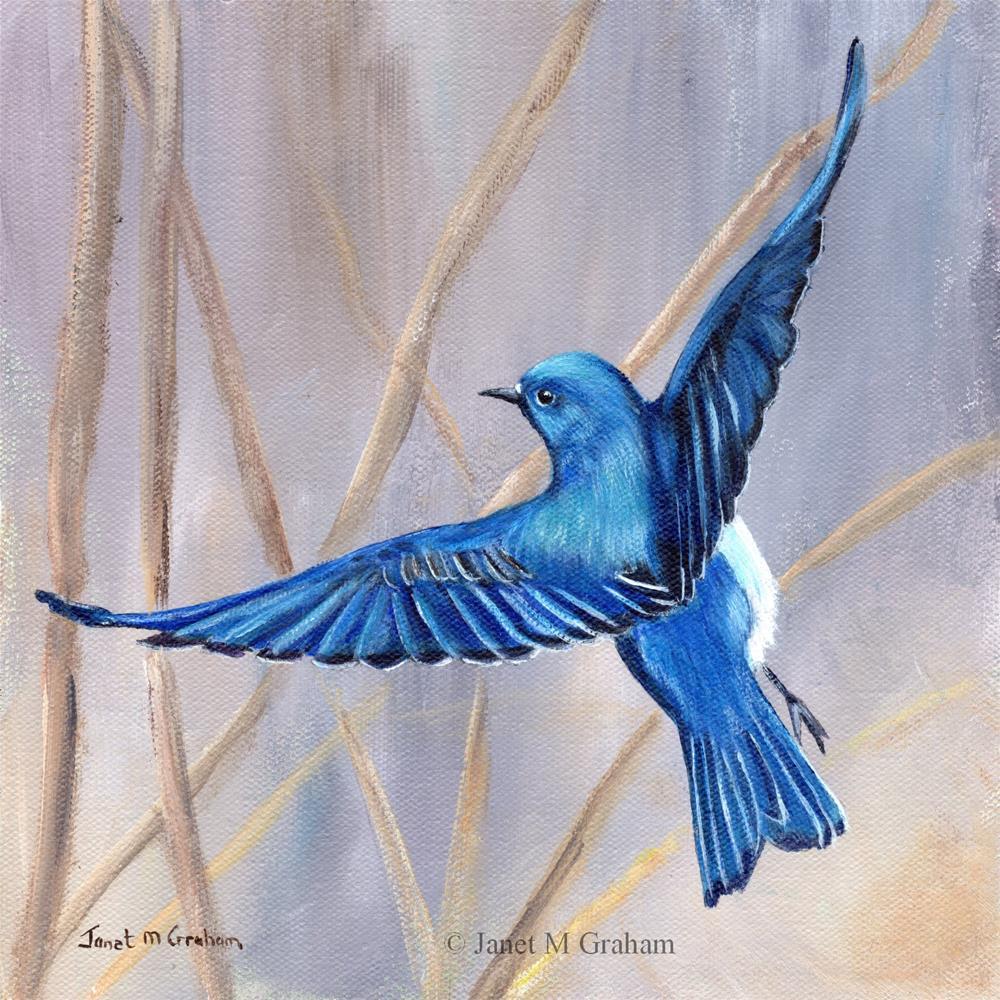 """""""Mountain Bluebird"""" original fine art by Janet Graham"""
