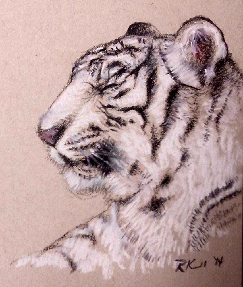 """White Tiger"" original fine art by Bob Kimball"