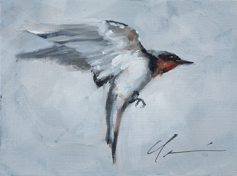 """Swallow Study"" original fine art by Clair Hartmann"