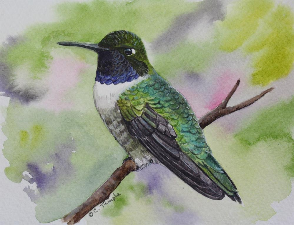 """Black-chinned Hummingbird"" original fine art by Catherine Temple"