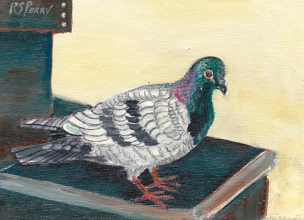 """Pigeon 4"" original fine art by R. S. Perry"