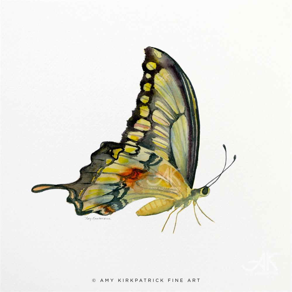 """#104 Perched Swallowtail Butterfly #0425"" original fine art by Amy Kirkpatrick"