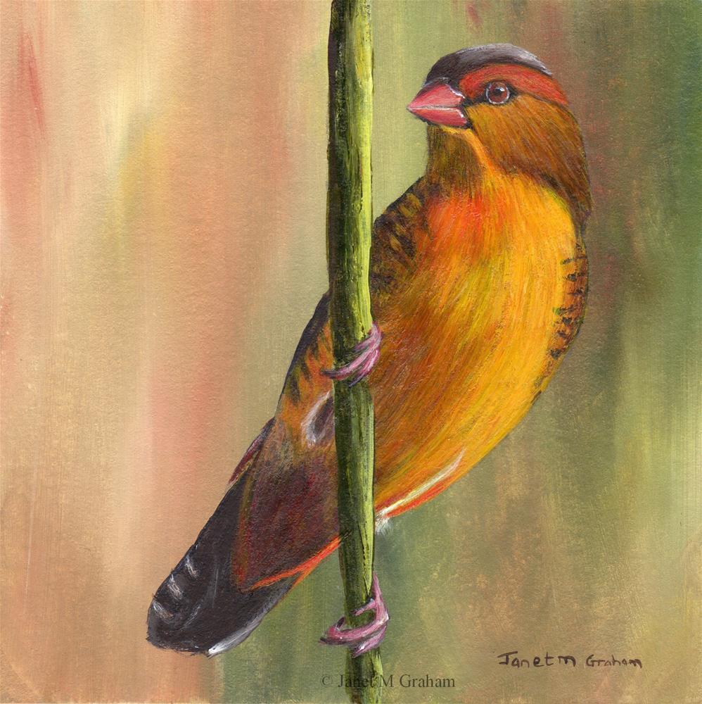 """Orange Breasted Waxbill"" original fine art by Janet Graham"