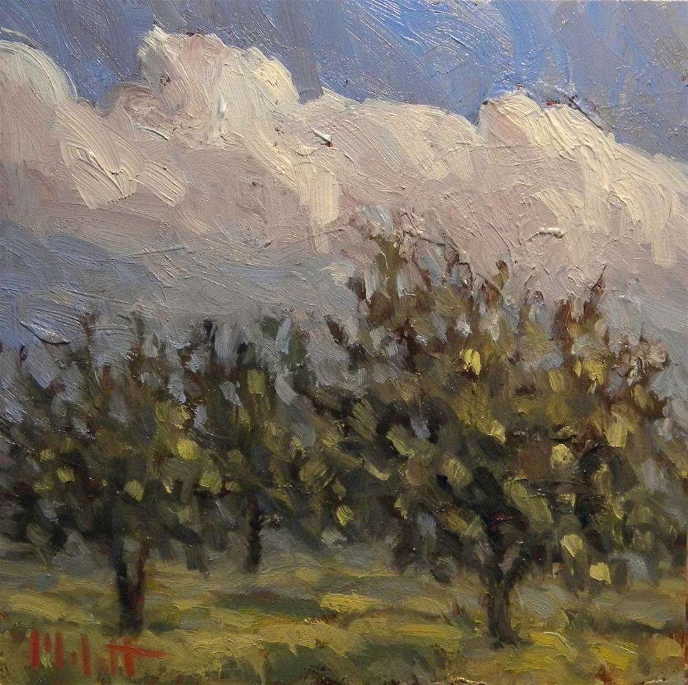 """Golden Delicious Apple Orchard Daily Oil Painting"" original fine art by Heidi Malott"
