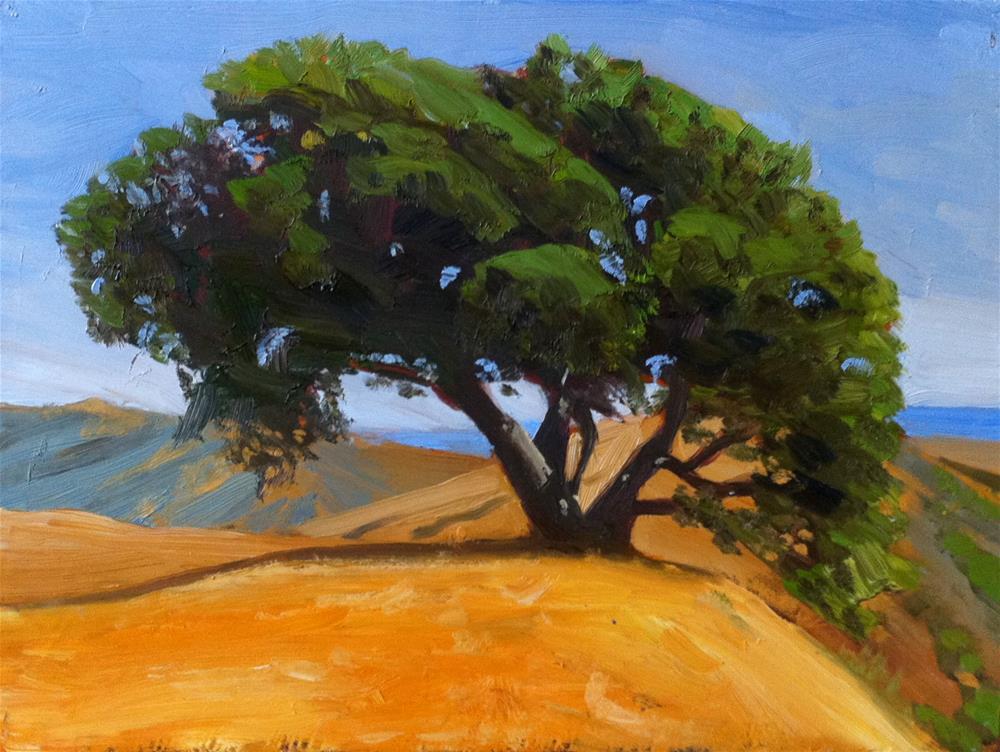 """California Live Oak"" original fine art by Peter Bain"