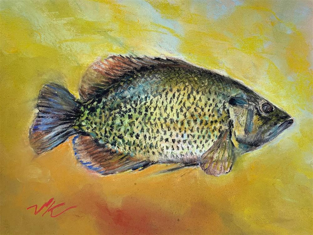 """Rock Bass"" original fine art by Jean Krueger"