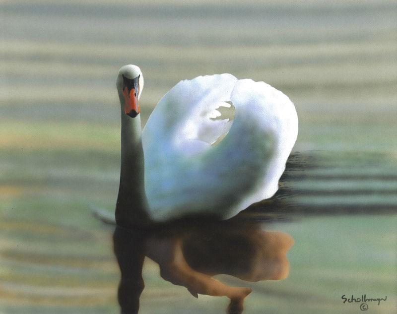"""Swan (Late Evening)"" original fine art by Fred Schollmeyer"