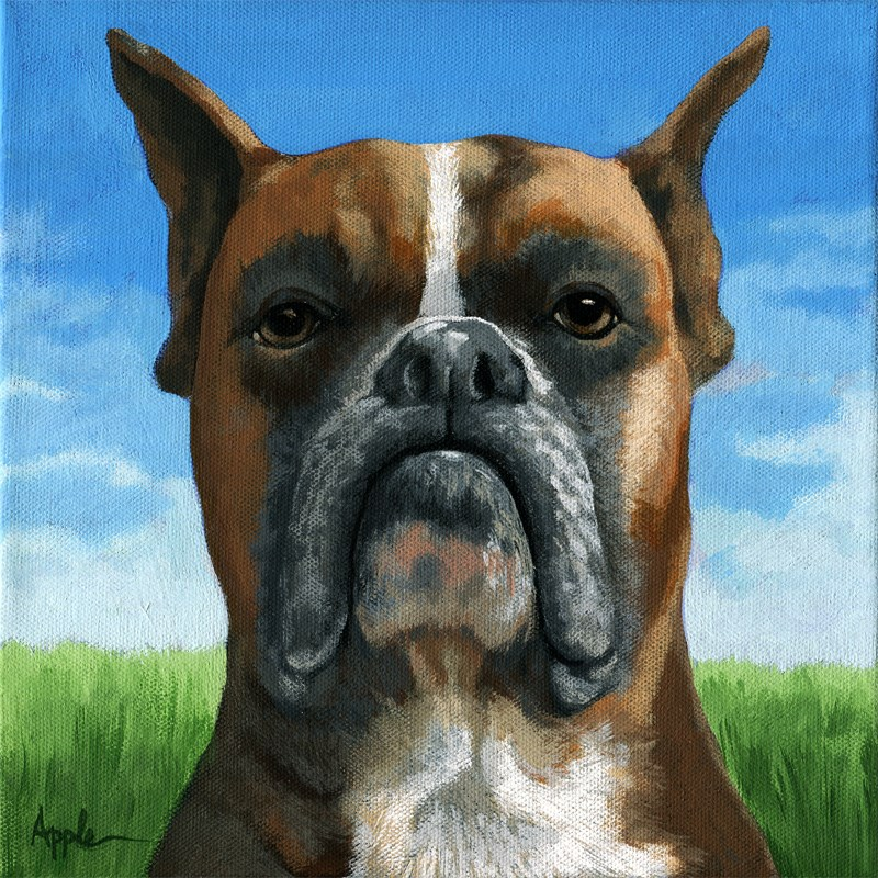 """Boxer dog portrait realistic animal painting by Linda Apple"" original fine art by Linda Apple"