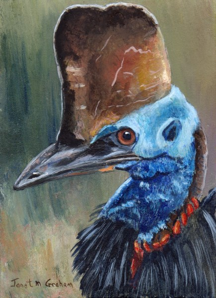 """Cassowary ACEO"" original fine art by Janet Graham"