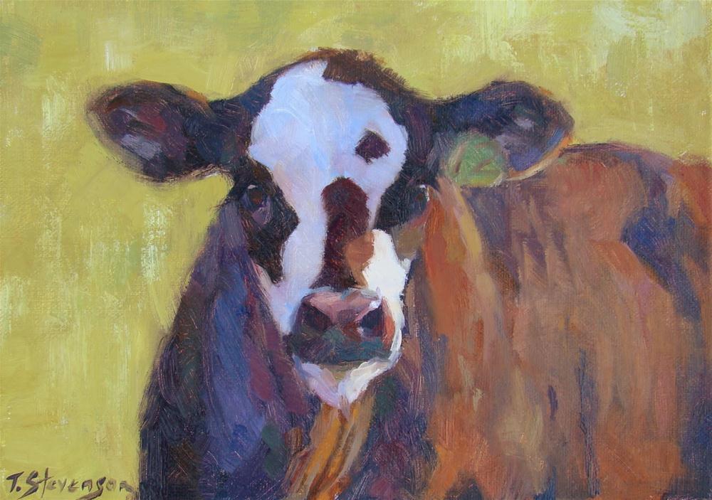 """Curious Calf"" original fine art by Trish Stevenson"