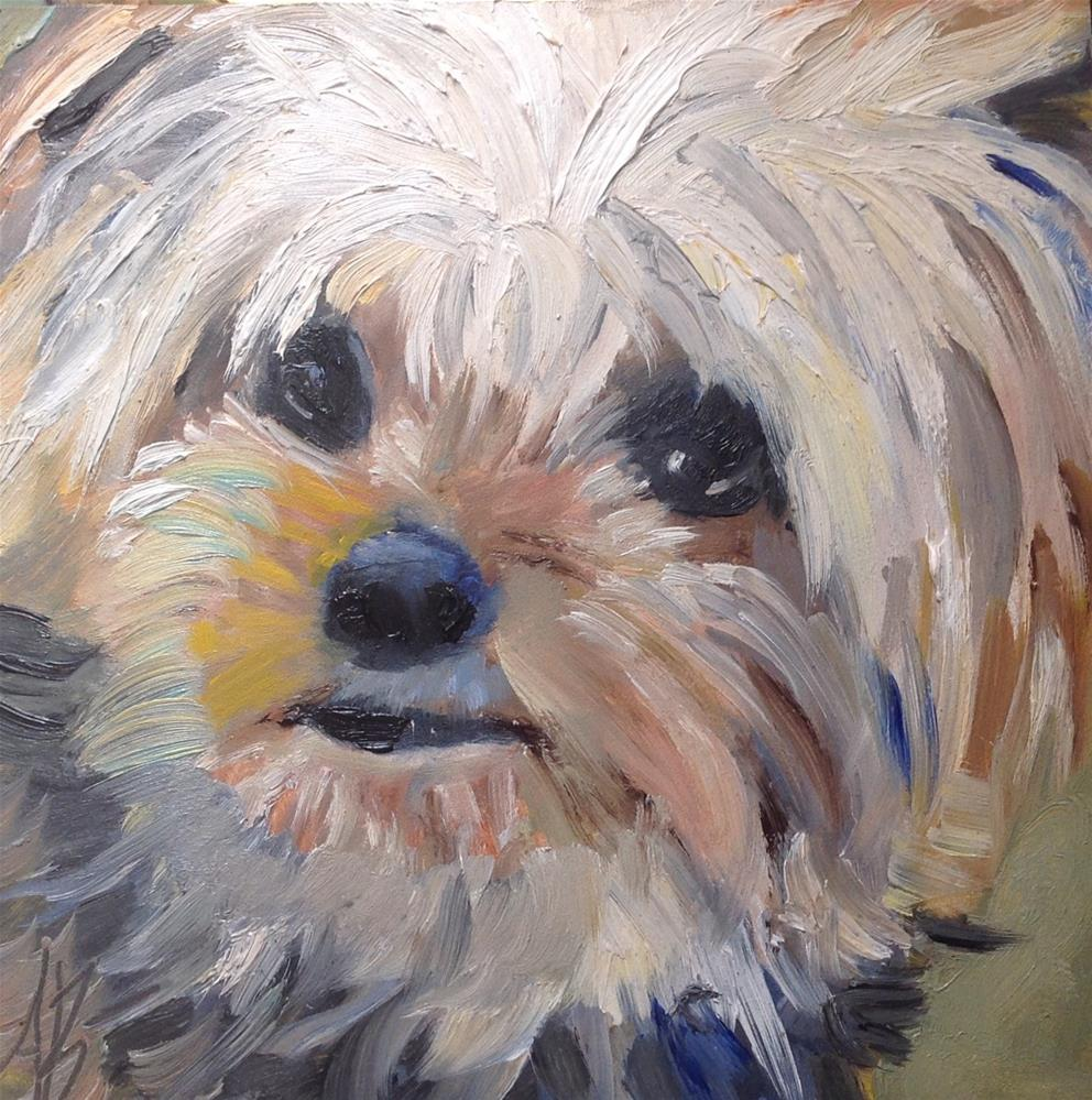 """""""Yorkie looking at YOU!"""" original fine art by Annette Balesteri"""