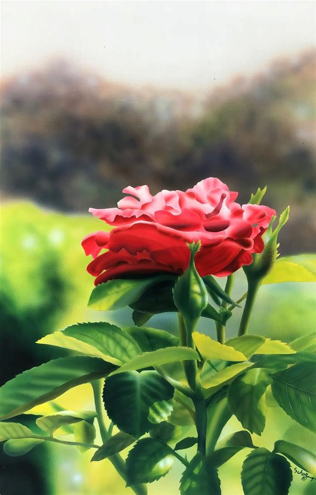 """Misty Rose"" original fine art by Fred Schollmeyer"