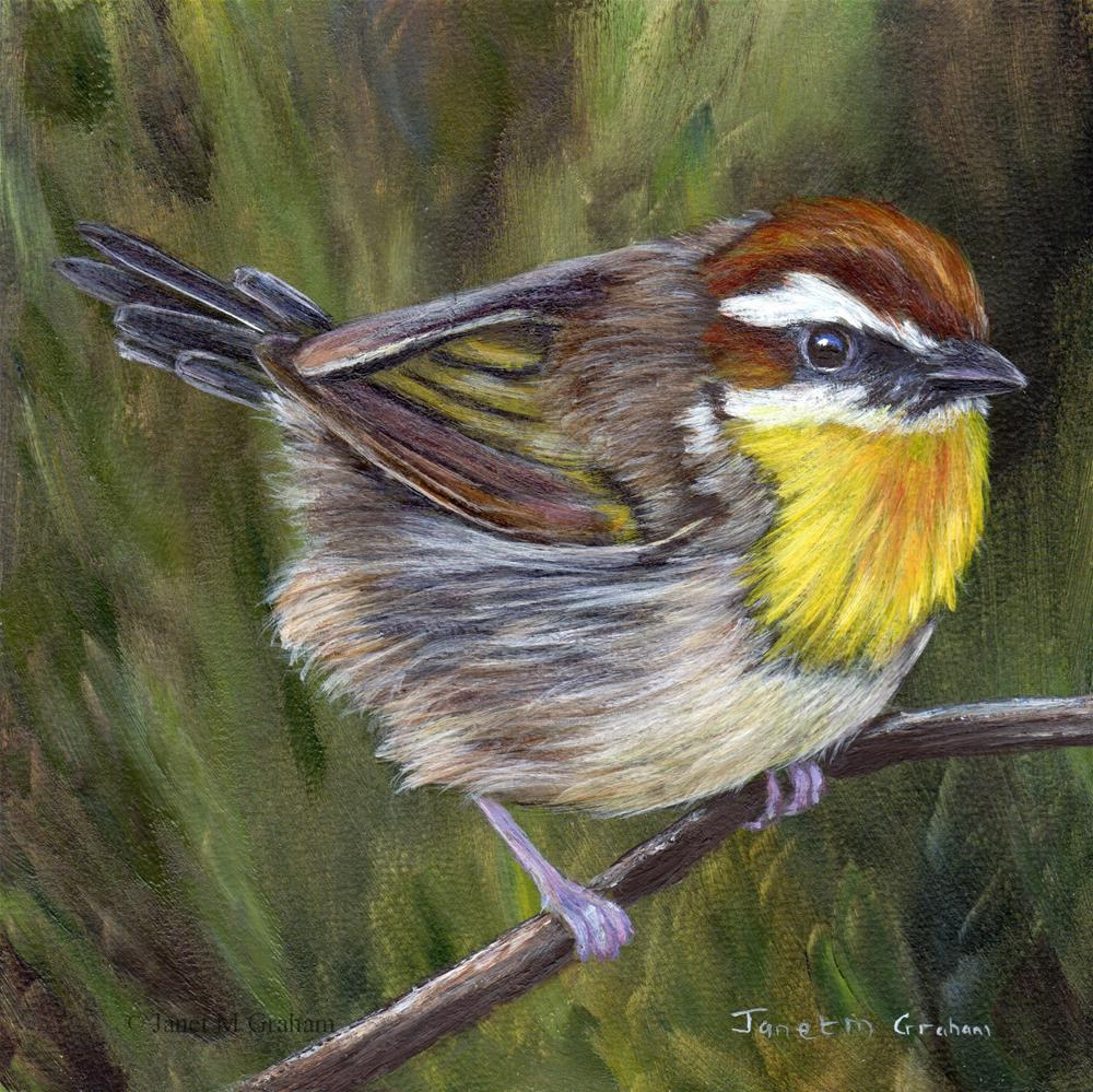"""Rufous Capped Warbler No 3"" original fine art by Janet Graham"