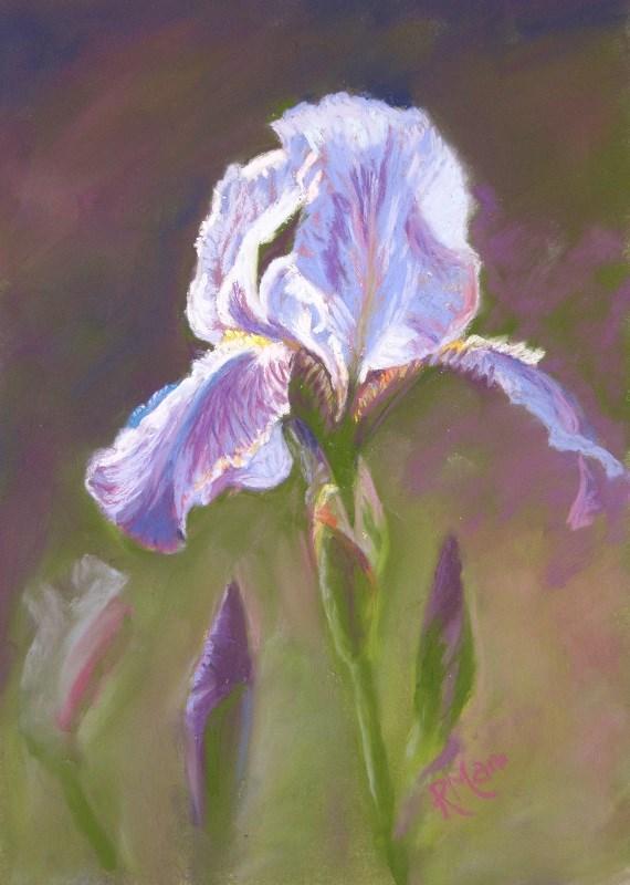 """""""Iris"""" original fine art by Ruth Mann"""