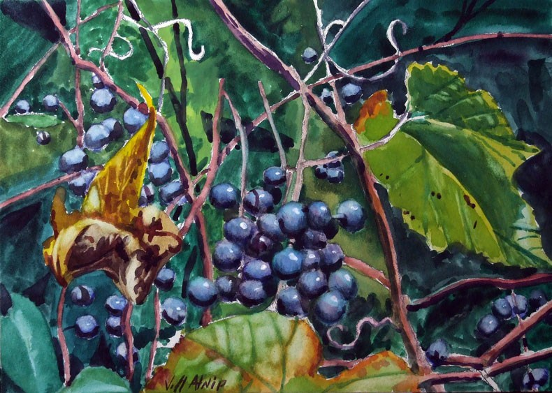 """Wild Grapes"" original fine art by Jeff Atnip"