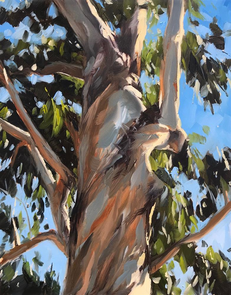 """Eucalyptus"" original fine art by Sharon Schock"