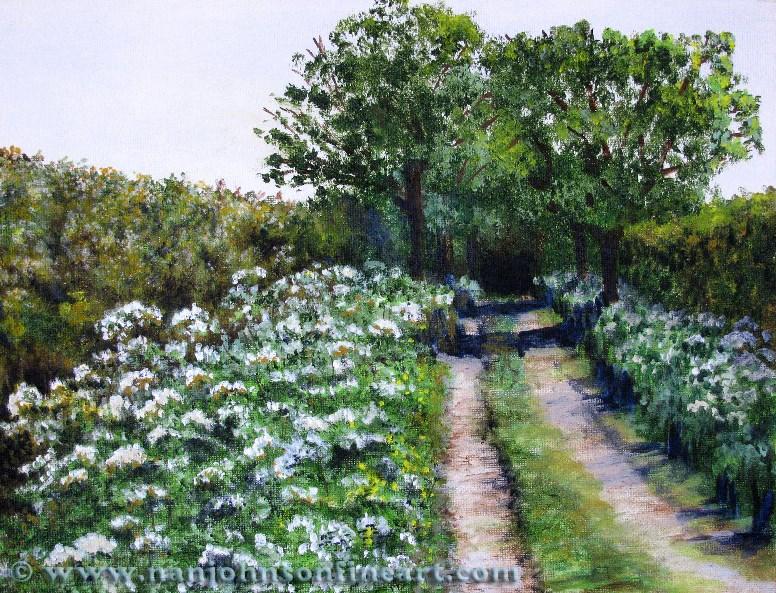 """""""Hedge Lane"""" original fine art by Nan Johnson"""