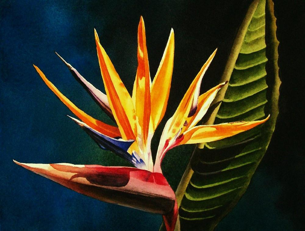 """Bird of Paradise"" original fine art by Jacqueline Gnott, TWSA, WHS"