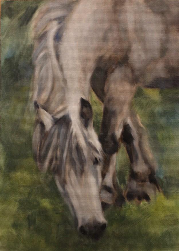 """""""Grazing Gray"""" original fine art by Pamela Poll"""