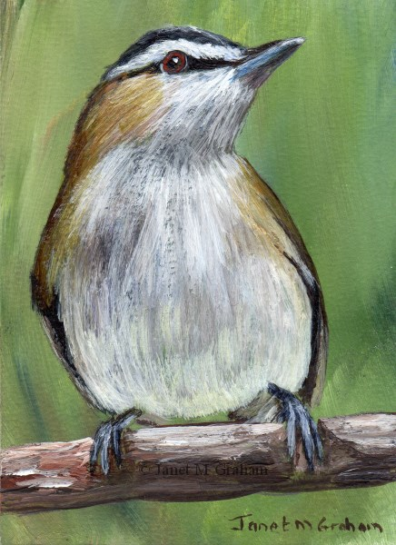 """Red Eyed Vireo ACEO"" original fine art by Janet Graham"