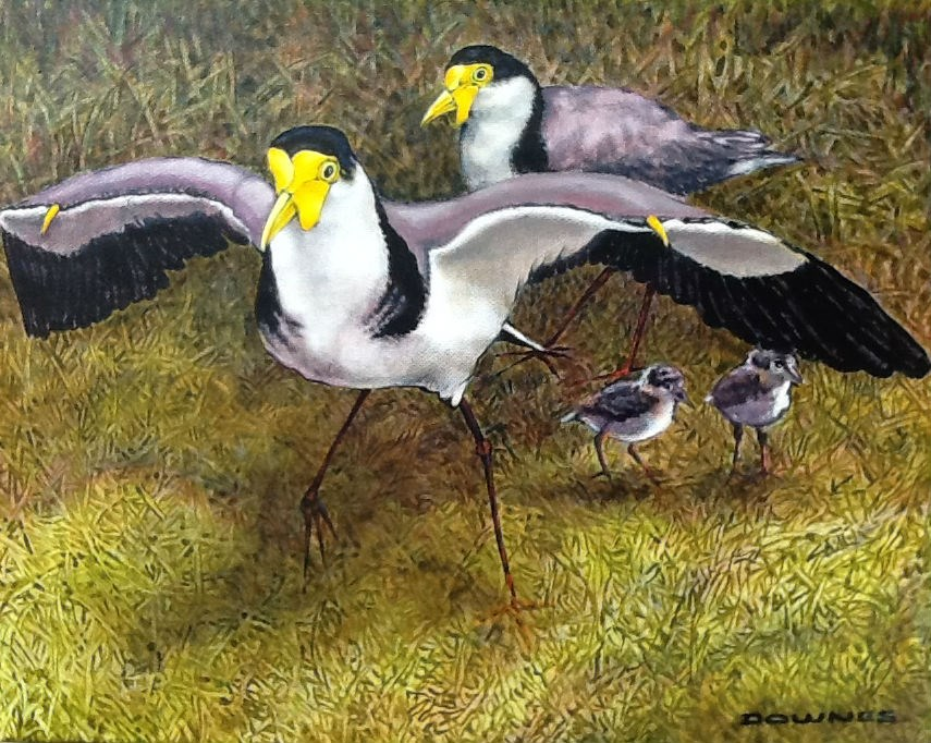 """289 SPUR-WINGED PLOVERS"" original fine art by Trevor Downes"