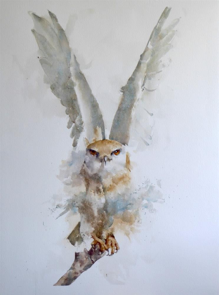 """Black-shouldered Kite"" original fine art by Michele Clamp"