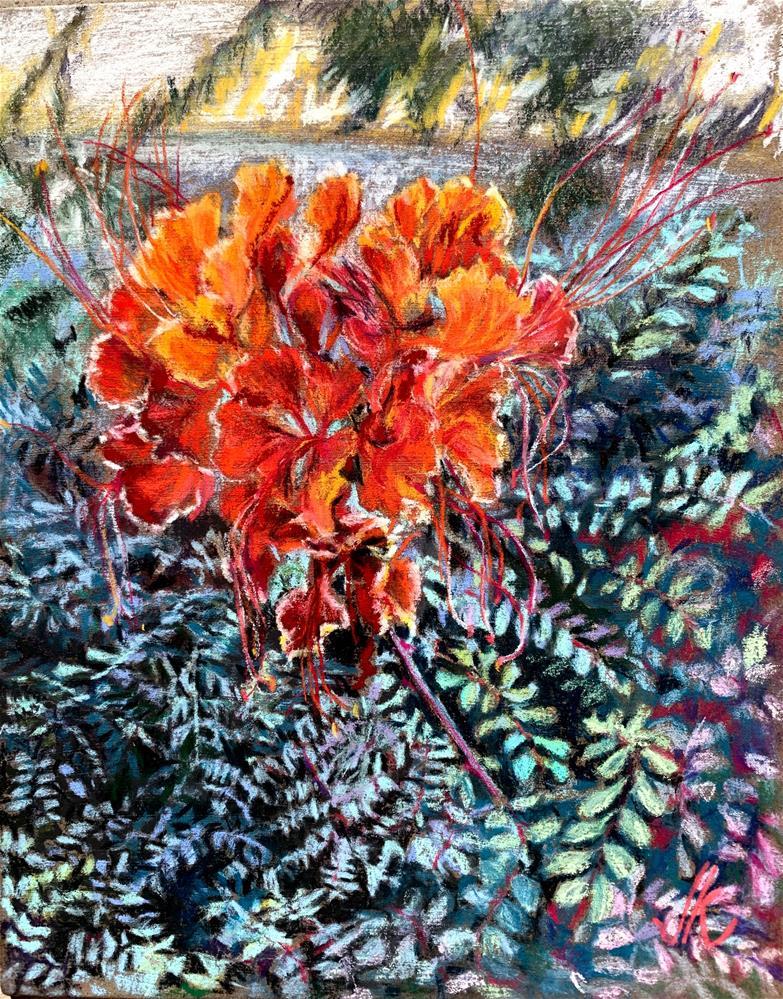 """Arizona Bird of Paradise - caesalpinia pulcherrima"" original fine art by Jean Krueger"