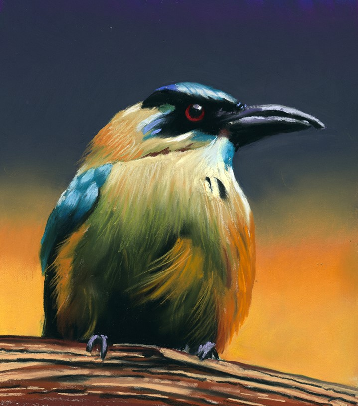 """Colorful Bird pastel painting"" original fine art by Ria Hills"